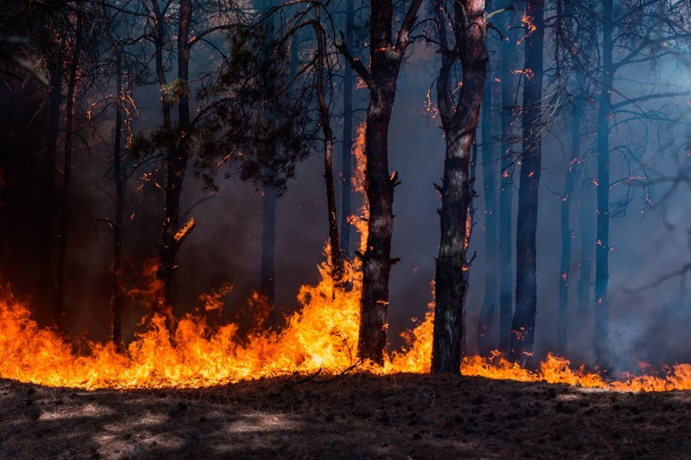 Bushfires: Employers' rights & obligations