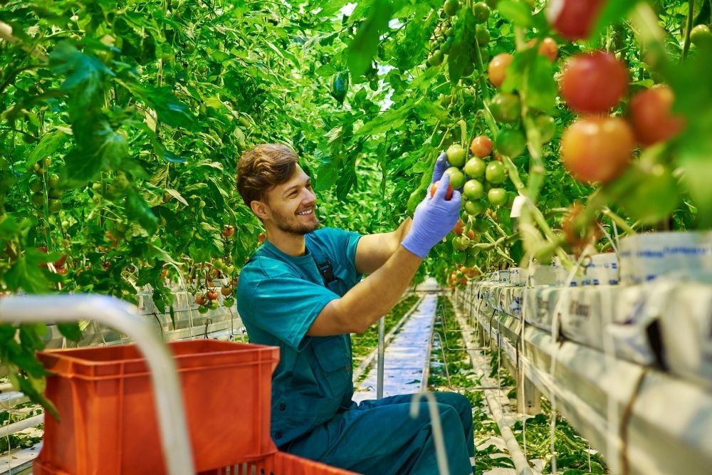 New Agriculture Visa to Commence in late September 2021
